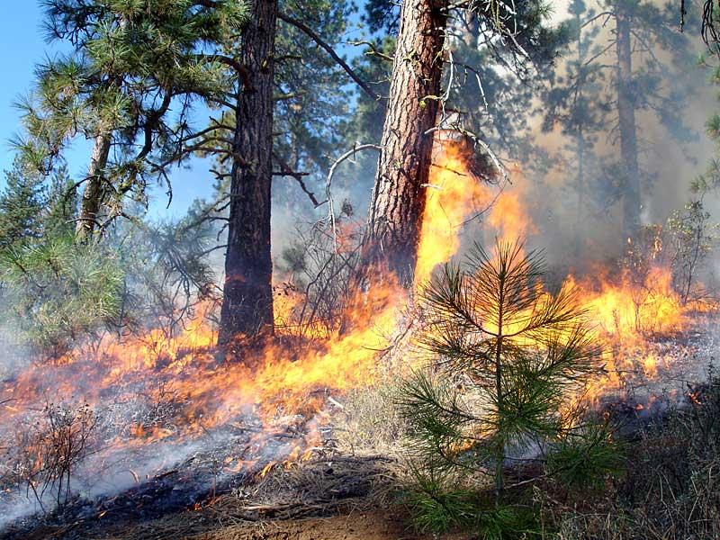 Waldbrände schaffen Artenvielfalt - waldwissen.net